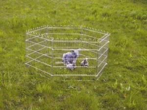 Konijnenren voor in de Tuin