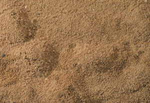 Terrarium Grind - kaviaar