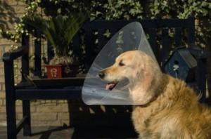 Plastic Hondenkraag