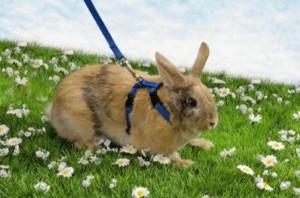 nylon konijnentuigje