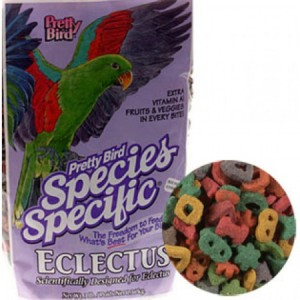 Pretty Bird - Eclectus Special