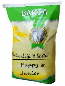 Barca - Puppy & Junior