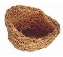 Kokosnest