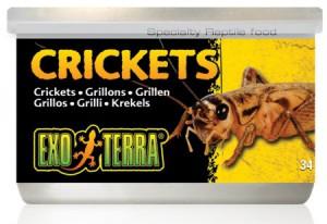 Productafbeelding voor 'Exo Terra - Kleine Krekels in blik'