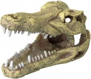 Crocodile Head kopen