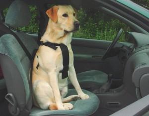 Productafbeelding voor 'Veiligheids Autogordel'