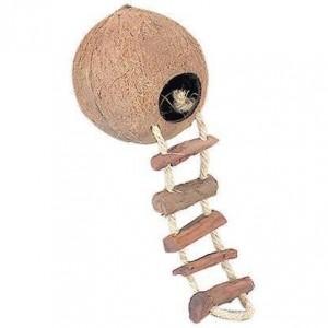 Kokosnoot Huis Met Ladder