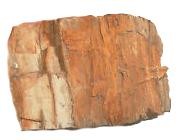 Aqua Steen Fossilized Wood