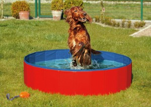 Karlie - Doggy Pool