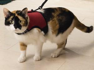 Beeztees - Loopharnas voor katten