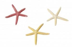 Ebi - Decor Starfish