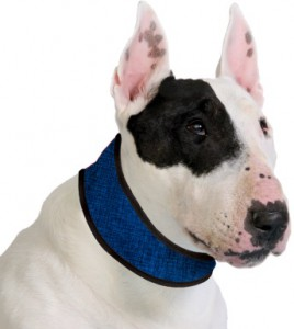 Aqua Coolkeeper Collar - Pacific Blue