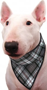 Aqua Coolkeeper Bandana - Scottish Grey
