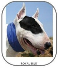Image of Aqua Coolkeeper Collar Royal Blue