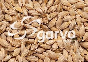 Garvo Gerst No.5301  20kg