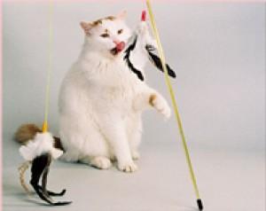 PURRfect - kattenhengel met veren