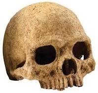 Exo Terra - Primate Skull