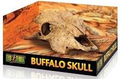 Exo Terra - Buffalo Skull