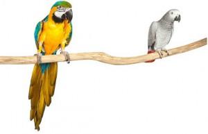 Back Zoo Nature Teak Perch Long