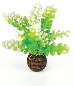 BiOrb Caulerpa Groen