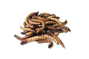Morio wormen 50st