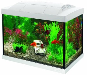 SuperFish - Start 20 Goldfish Kit Wit