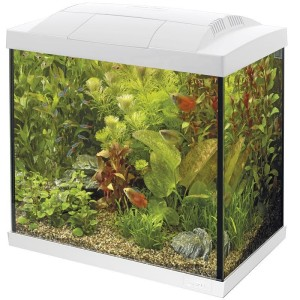 SuperFish - Start 30 Tropical Kit Wit