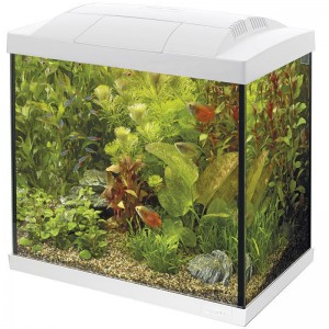 SuperFish - Start 50 Tropical Kit Wit