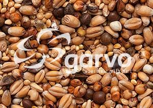 Garvo - Tortelduivenvoer [5426]