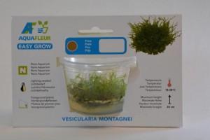 Sf Easy Grow 14 - Vasiccularia Montagnei -Christmas moss-