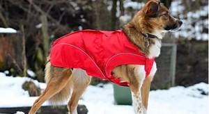 Image of Dogbite - Winteras Rood