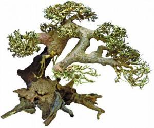 Superfish - Bonsai Driftwood Large
